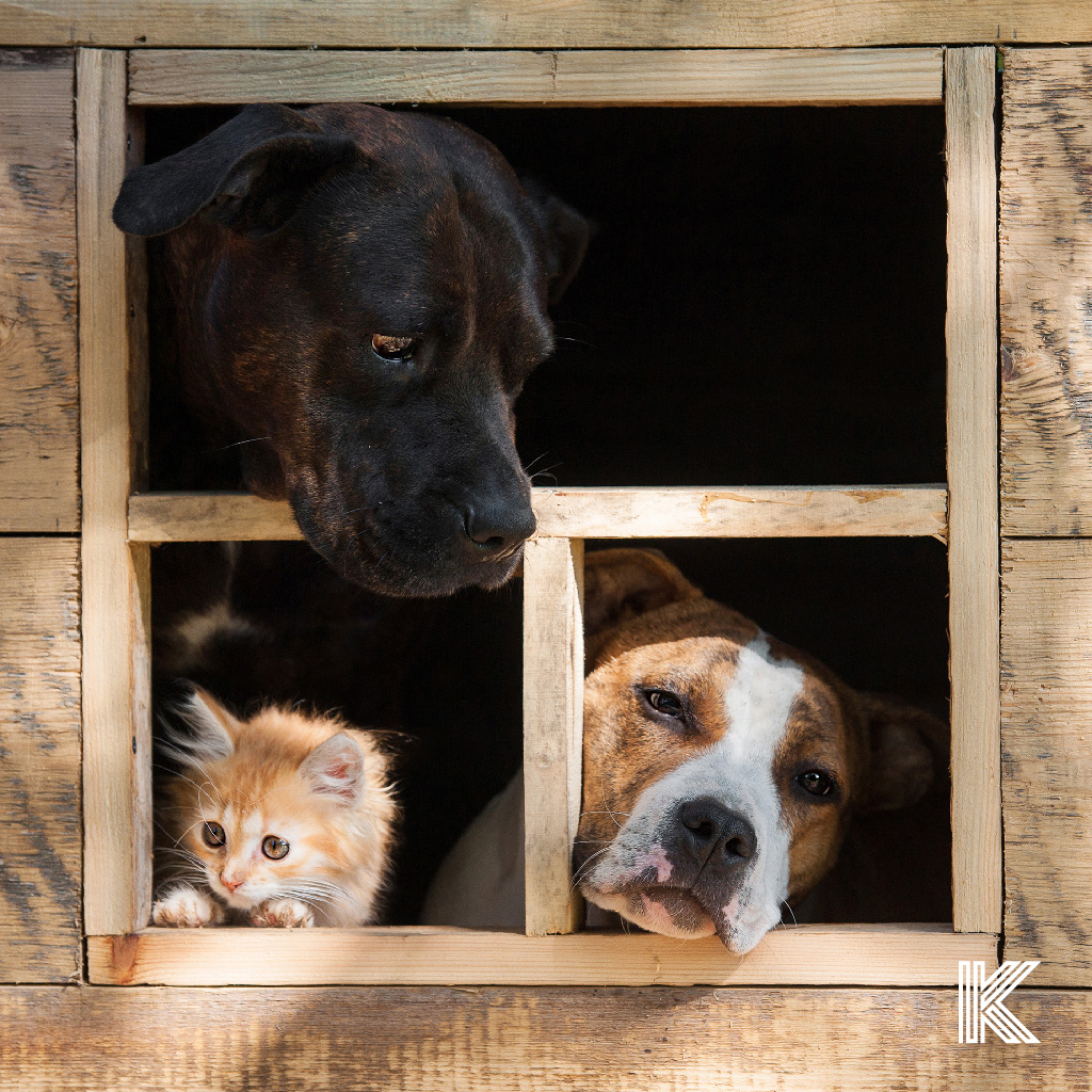 Animals in the window